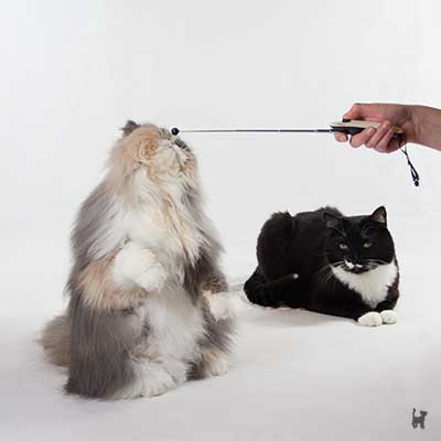 Clickern mit zwei Katzen