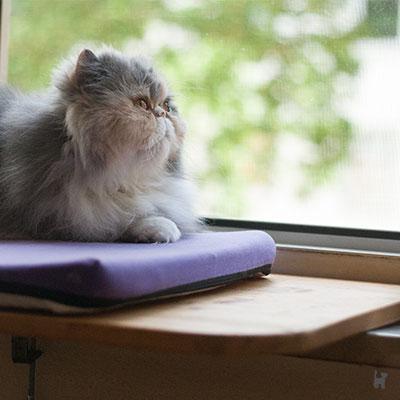 Katze Janis auf der selbstgemachten Fensterliege