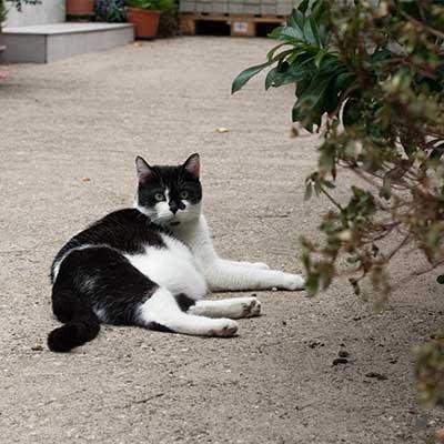 Kater Lenny entspannt sich draußen