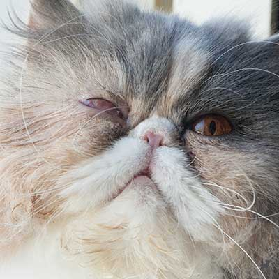 Katze Janis mit zugenähtem Auge 10 Tage nach ihrer Augen-OP