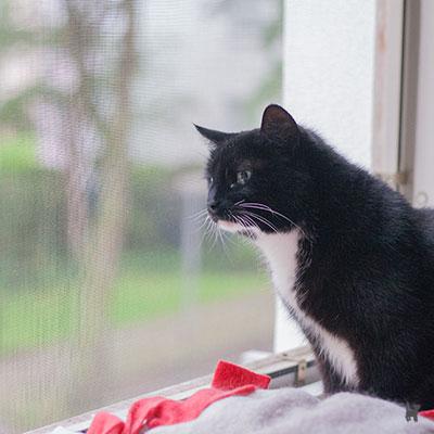 Katze Tiffy sitzt am abgesicherten Fenster