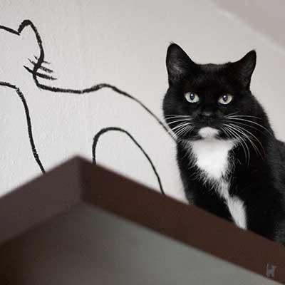 Katze Tiffy auf einem Regal