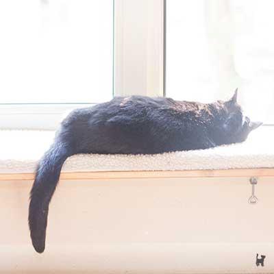 Kater Muffin auf der Fensterliege am Morgen seines Todes