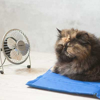 Katze Lara auf Kühlmatte mit Mini-Ventilator