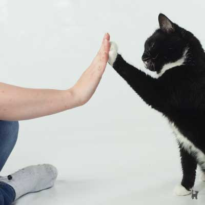 Kater Muffin gibt High-Five