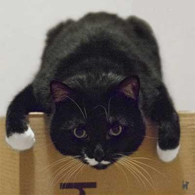 Kater Muffin hängt von Karton herunter