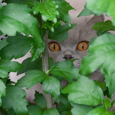 Katze Jazzbell im Gebüsch