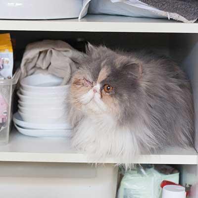 Katze Janis mit zugenähtem Auge