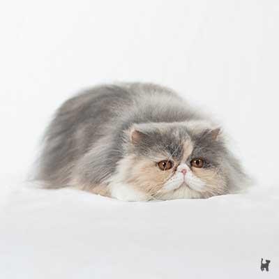 Katze lauert