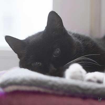 Katze Tiffy liegt auf ihrer Wärmematte