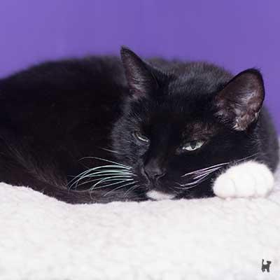 Katze Tiffy döst in ihrem Alter viel