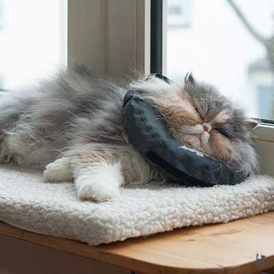 Katze Janis mit Halskragen