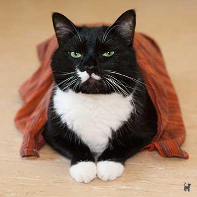 Katze mit nassem Handtuch auf dem Rücken