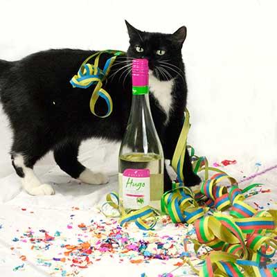Katze Tiffy hat keine Probleme mit Konfetti und Luftschlangen