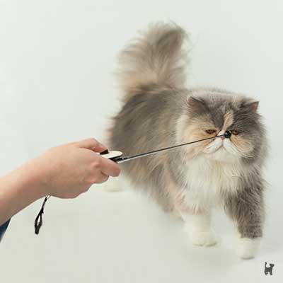 Katze Janis läuft zum Targetstab