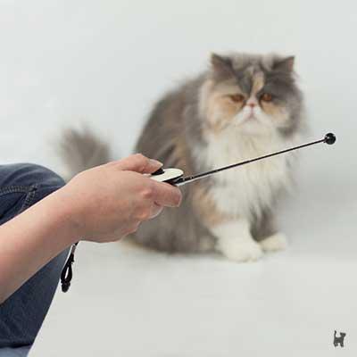 Katze Janis schaut den Targetstab an