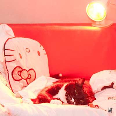 Kater Muffin unter der Wärmelampe