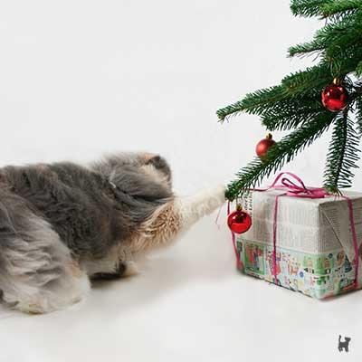 Katze Janis zieht am Weihnachtsbaum