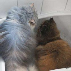 Janis und Lara benutzen gemeinsam die Toilette