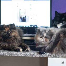 Tiffy, Janis und Lara blockieren meinen PC