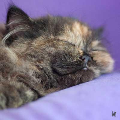 Kitten Lara schläft