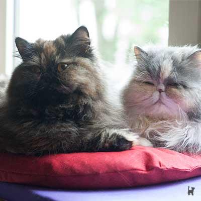 Lara und Janis kuscheln auf der Fensterliege