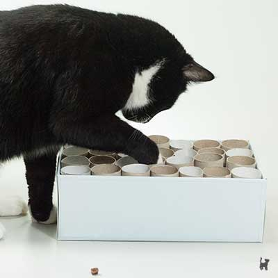 Kater Muffin räumt die Fummelbox leer