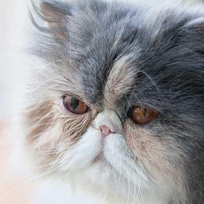 Katze Janis mit unterschiedlich großen Pupillen