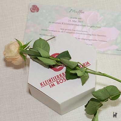 Muffins Pappurne mit gelber Rose