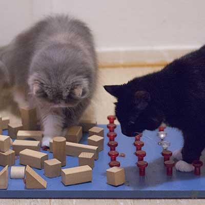 Katzen spielen am Fummelbrett