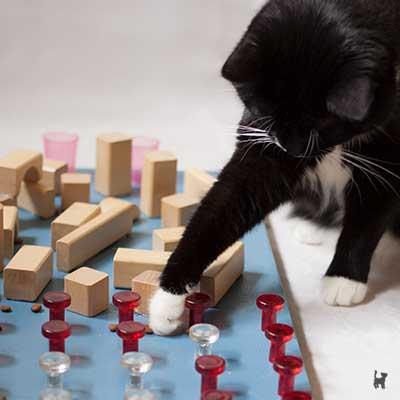 Katze spielt am Fummelbrett
