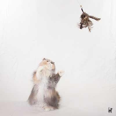 Katze spielt mit Laola Federangel