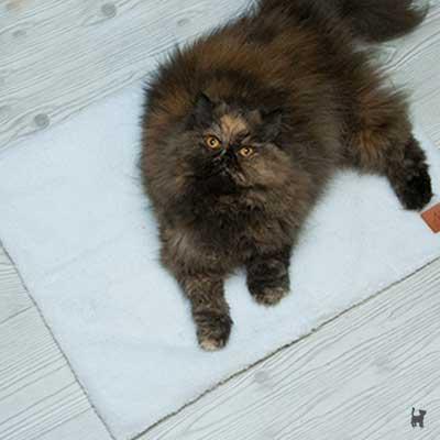 Katze auf selbstheizender Katzendecke