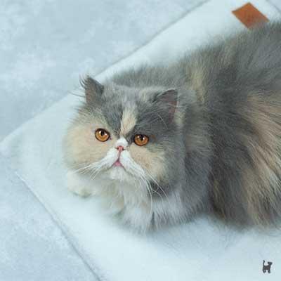 Katze Janis auf der selbstheizenden Katzendecke