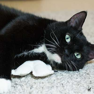 Katze kuschelt mit Baldrianpuppe