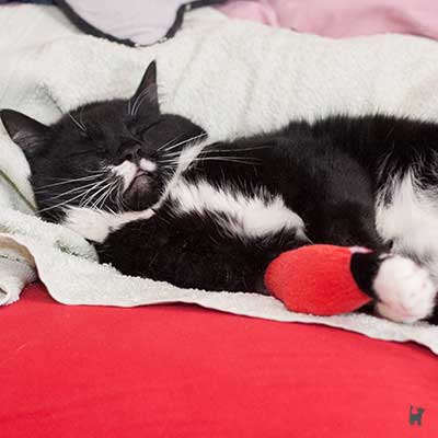 Katze mit roter Bandage