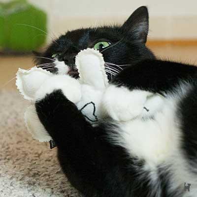 Katze spielt mit Baldrianpuppe