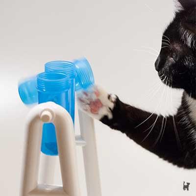 Katze spielt an 'turn around' Intelligenzspielzeug