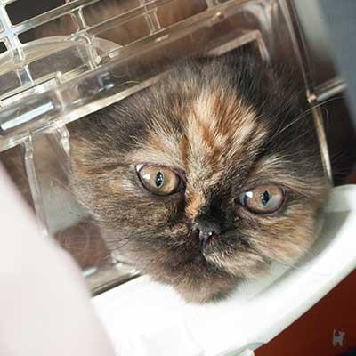 Kitten steckt Kopf durch Napfhalterung