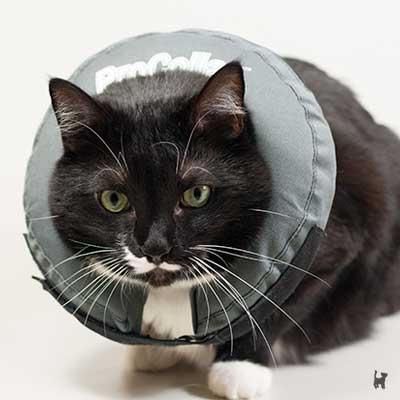 Katze mit Halsschutz