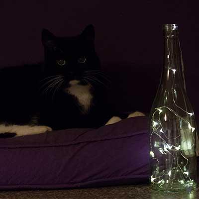 Alte Katze mit Nachtlicht