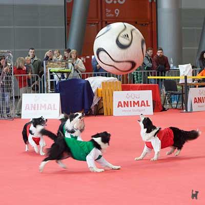 Hunde mit Trikots spielen Fußball