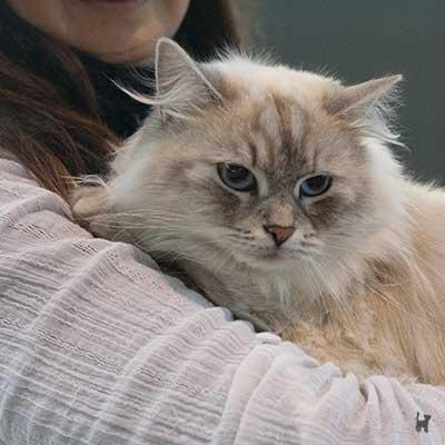 Katze auf Arm
