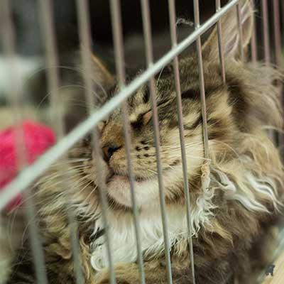 Katze döst in Ausstellungskäfig