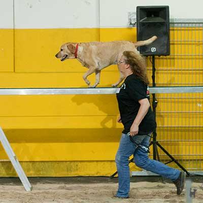 Dogagility: Hund läuft neben Halterin auf Laufsteg