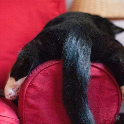 Katze hängt auf Sofalehne