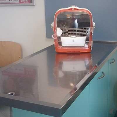 Katze in Transportbox auf Metalltisch