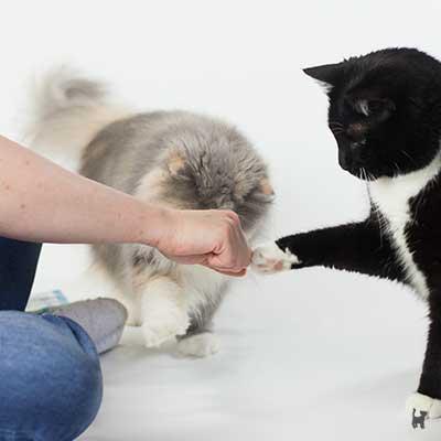 Katze gibt Pfote