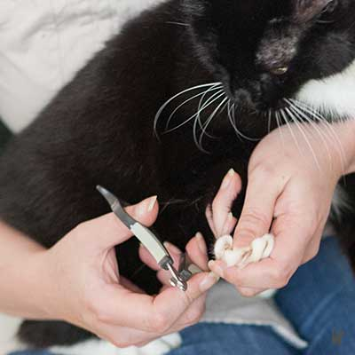 Krallen schneiden bei einer Katze