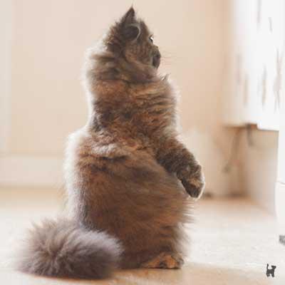 Kitten steht auf den Hinterbeinen